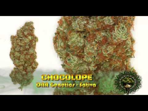 High Times 20th Anniversary Cannabis Cup
