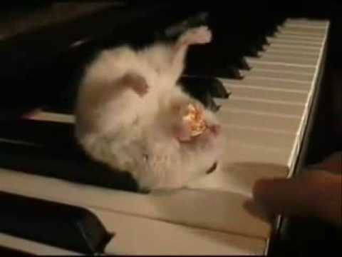 Cute Piano Hamster