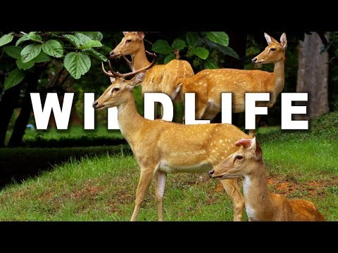 WILDLIFE IN 4K (ULTRA HD) 60fps