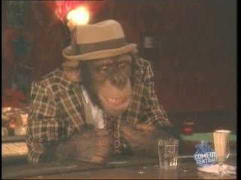 Monkey in a bar