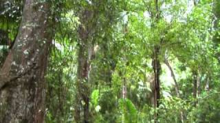 Mount Burrell Australia  city pictures gallery : Mt Warning, Australia, NSW 26.04.2011 wmv.
