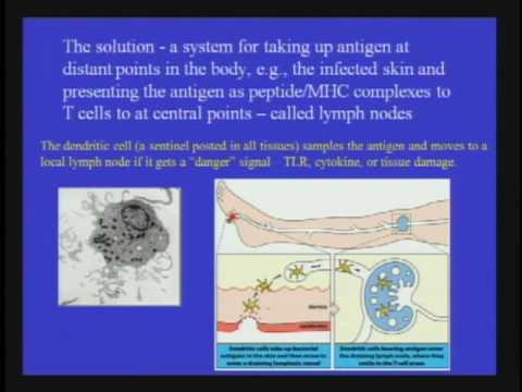 Die Notwendigkeit des Immunsystems