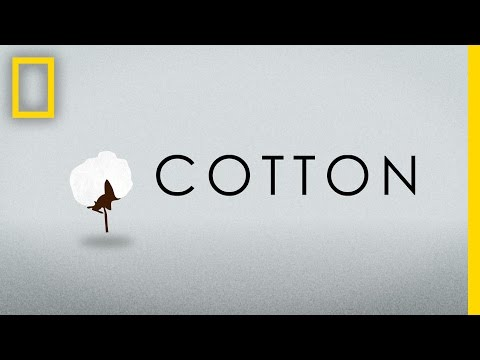 Watch: The Ecological Footprint of a Cotton T-Shirt