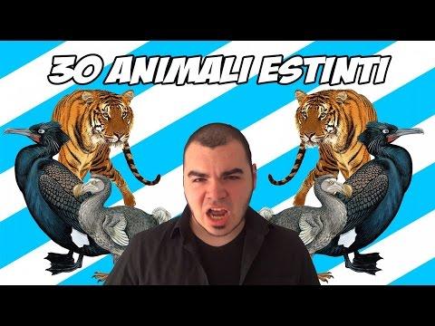 animali estinti a causa dell'uomo