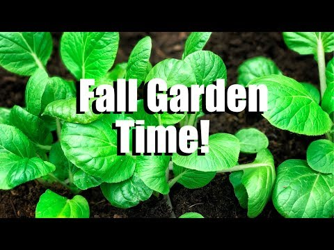 Fall Gardening #1: Cool Weather Vegetables - What are They, How to Plant Them and What I am Growing