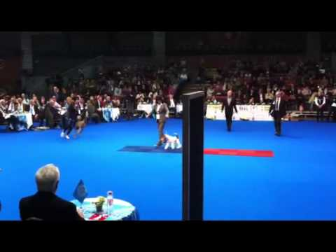 Olimpia dei GG - part 3