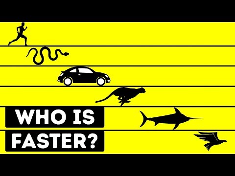 Who Is the Fastest Living Being in the World?
