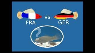 SIEG für Deutschland