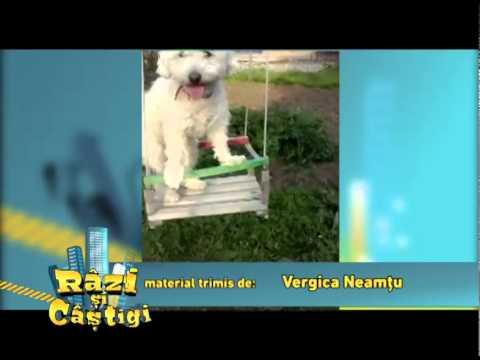 Un câine în leagăn