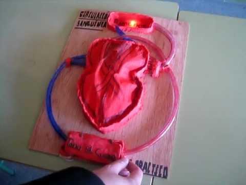 Como hacer un corazon humano en plastilina - Imagui