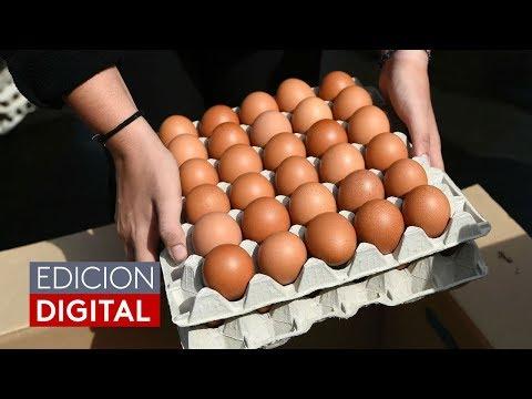 Síntomas de alerta ante el posible consumo de huevos contaminados con salmonella