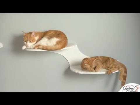 Cloud Shelf by The Refined Feline - A Petco Product Feature