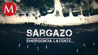 Sargazo en playas del Caribe mexicano /Especiales Milenio