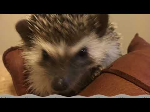 A Day In The Life Of Olive The Hedgehog