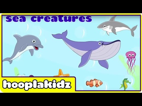 Learn About Sea Creatures - Interactive Learning Videos