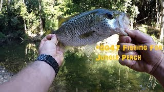 Went up north to cqtch some big jungle perch during my holidays !!! Facebook page : https://www.facebook.com/maxisfishing/...