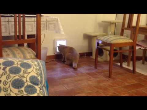 La prima uscita da solo dalla gattaiola