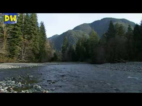 Pesca de salmones salmón plateado