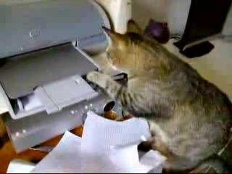 il gatto che lavora in ufficio