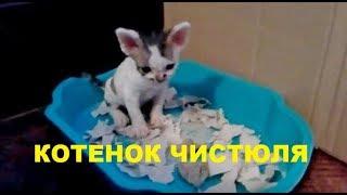 трехнедельный котёнок не ходит только ползает