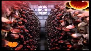 Kỹ thuật trồng nấm linh chi đỏ đạt chất lượng cao theo phương pháp tự nhiên kết hợp công nghệ tạo ra nấm linh chi chất lượng cao.Xem thêm tại http://www.lamm...