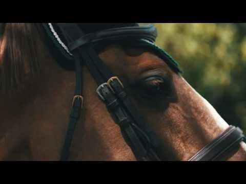 Szimfónia - lovakkal