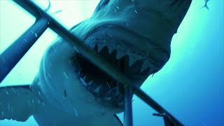 SharkWeek  Starts Sun Jul 23 The countdown to Shark Week is on! Here's Sharktacular, your must-see survival guide to Shark Week. Full Episodes Streaming ...