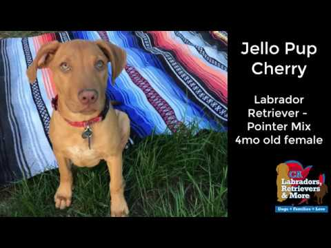 Jello Pup Cherry - Adopted!