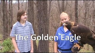 The Golden Eagle (World Bird Sanctuary)- Episode 112