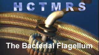 How Creationism Taught Me Real Science 33 Bacterial Flagellum