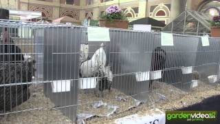 Happy hens at the Edible Garden Show in London