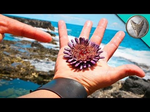 SPIKED by a Sea Urchin? (видео)