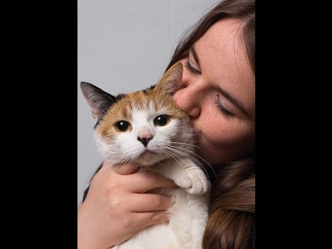 Cat Health – Keeping Your Cat Healthy