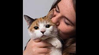 Cat Health - Keeping Your Cat Healthy