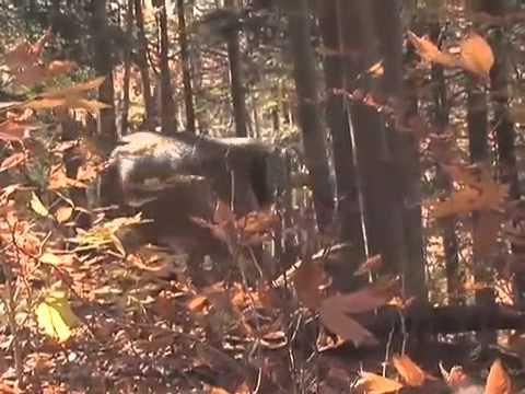 2009 Rut Prediction, Deer & Deer Hunting TV, Episode 5, Season 5