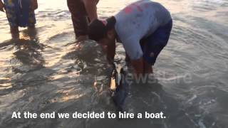 Ngwesaung Beach Myanmar  city photo : Dolphin Rescue at Ngwe Saung Beach, Myanmar (Burma)