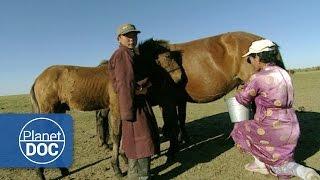 Video Genghis Khan. Nomadic Desert | Culture - Planet Doc Full Documentaries MP3, 3GP, MP4, WEBM, AVI, FLV Juli 2018