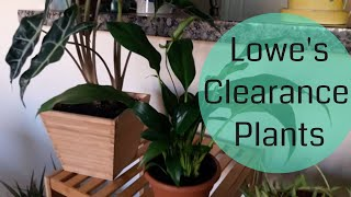 Lowe's Plant Haul | Clearance Plants