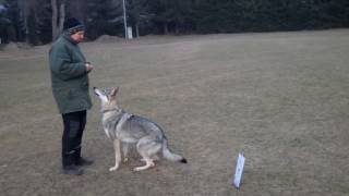 rally obedience training