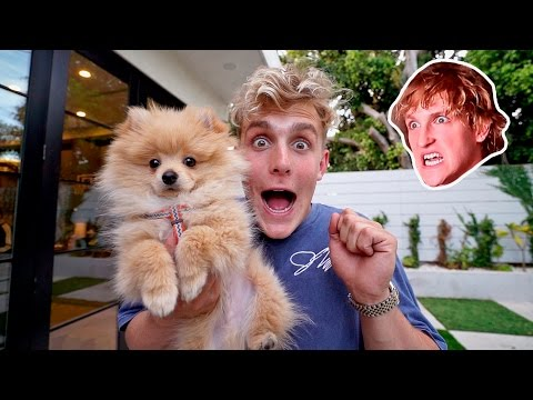 I STOLE MY BROTHERS PUPPY **PRANK WARS** (HE FREAKED OUT) (видео)