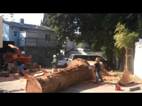 California Tree Solutions   (408) 910-5143