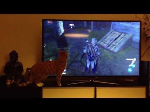 超強3D電視,連貓也被騙過去了! 有種就出來單挑啊!