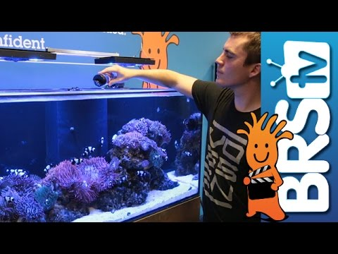 Celebrating One Year! | EP 6: Clownfish Harem Tank