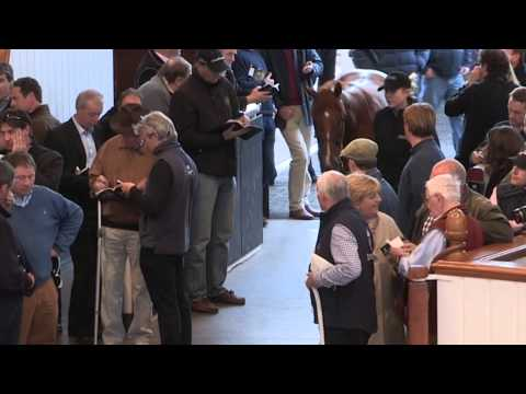 Tattersalls Craven Breeze Up Sale Day 2 Video Review 2015