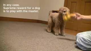 Dog Training 3