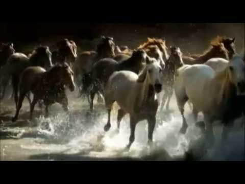 Horses On The Beach in Corpus - Texas Road Trippin'