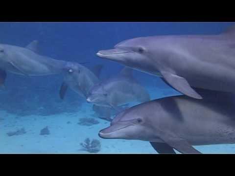 Potápění s delfíny