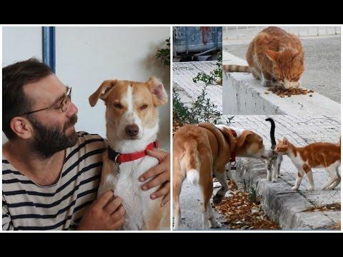 cane-adottato-aiuta-ogni-giorno-30-gatti-randagi-salvando-le-loro-vite