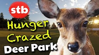 Nara Japan  city images : Deer in Nara Park // Things to Do in Nara, Japan // Solo Travel Channel
