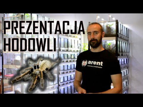 Jak wygląda HODOWLA PTASZNIKÓW? I arent.pl